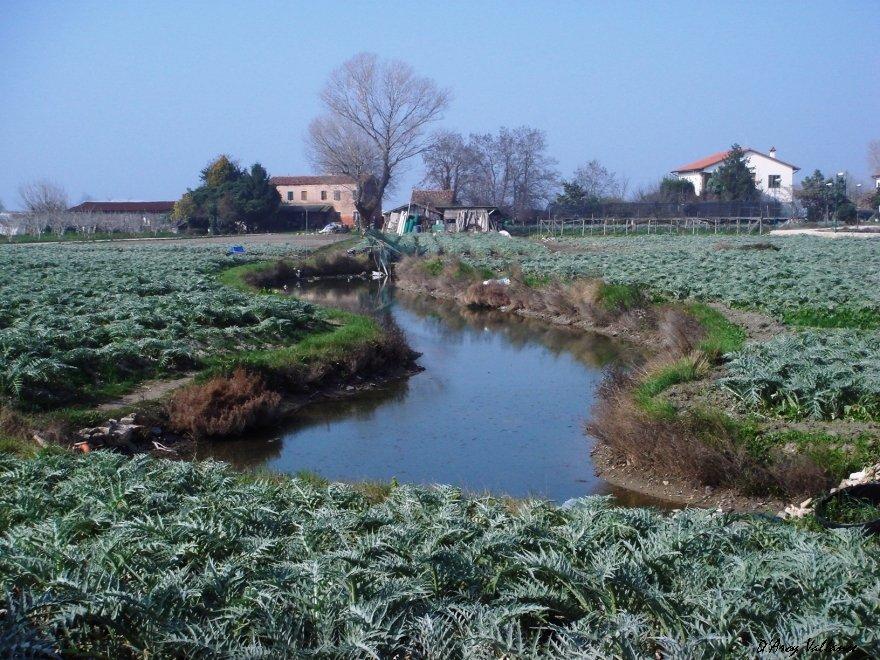 Sant'Erasmo field and farm